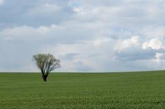 вал поля сиротливый Стоковое фото RF