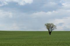 вал поля сиротливый Стоковые Изображения