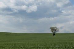 вал поля сиротливый Стоковые Фото