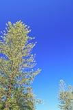 вал сосенки озера baikal предпосылки Стоковая Фотография