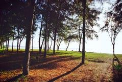 вал сосенки озера baikal предпосылки Стоковые Изображения