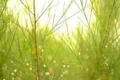 вал сосенки озера baikal предпосылки Стоковая Фотография RF