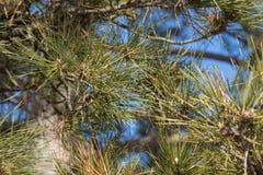 вал сосенки озера baikal предпосылки Стоковое Фото