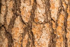 вал сосенки расшивы Стоковое Фото