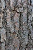 вал сосенки расшивы Стоковые Фото