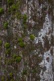 вал текстуры мха расшивы Стоковая Фотография RF