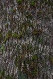вал текстуры мха расшивы Стоковые Фотографии RF