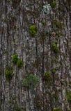 вал текстуры мха расшивы Стоковые Изображения RF