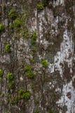 вал текстуры мха расшивы Стоковое фото RF