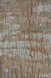 вал текстуры тополя расшивы старый Стоковая Фотография RF
