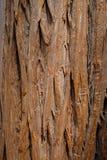 вал текстуры тополя расшивы старый Стоковые Изображения
