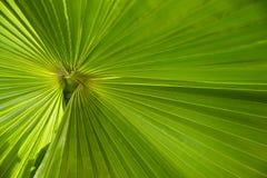 вал текстуры фото бумаги ладони листьев изображения голубой книги предпосылки альбома Стоковое Фото