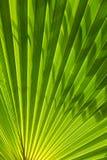вал текстуры фото бумаги ладони листьев изображения голубой книги предпосылки альбома Стоковые Фото