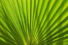 вал текстуры фото бумаги ладони листьев изображения голубой книги предпосылки альбома Стоковые Изображения