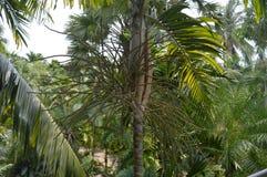 вал тропический стоковые фотографии rf