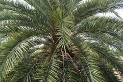 вал тропический стоковые изображения rf