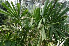вал тропический стоковая фотография