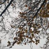 вал тропы природы пущи Стоковая Фотография RF