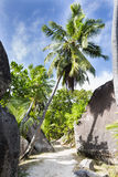Валуны и пальмы, Ла Digue, Сейшельские островы Стоковые Изображения