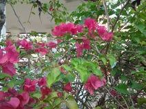вал цветка розовый стоковое изображение