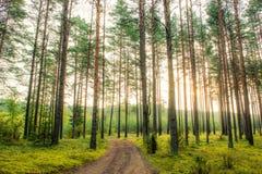 валы восхода солнца сосенки стоковая фотография