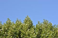 валы голубого неба Стоковые Изображения RF