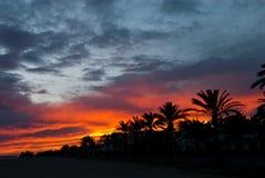 валы захода солнца ладони Стоковое Фото