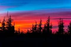 валы захода солнца сосенки Стоковые Изображения