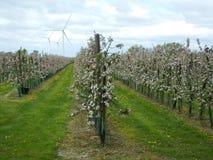 валы листьев одного яблока чуть-чуть полные Стоковая Фотография RF