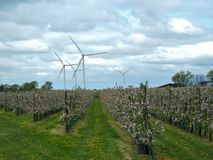 валы листьев одного яблока чуть-чуть полные Стоковые Изображения RF