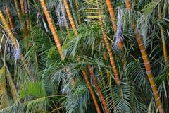 валы конца бамбука предпосылки естественные вверх Стоковое Изображение RF
