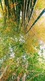 валы конца бамбука предпосылки естественные вверх Стоковое Изображение