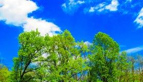 валы неба голубого зеленого цвета Стоковая Фотография RF