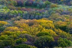 валы осени цветастые Стоковая Фотография RF