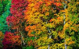 валы осени цветастые Стоковое Изображение