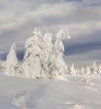 Валы покрытые с hoarfrost и снежком стоковое изображение rf