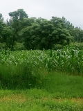 валы полей зеленые Стоковая Фотография RF