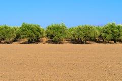 валы прованской плантации стоковые фото
