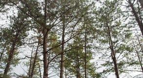 Валы пущи осени Предпосылки солнечного света древесной зелени природы Стоковое Изображение RF