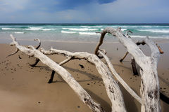 валы пляжа мертвые Стоковое Фото