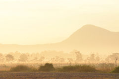 валы силуэта утра ландшафта дома тумана Стоковое Изображение RF