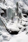 валы снежка сосенки Стоковые Фотографии RF