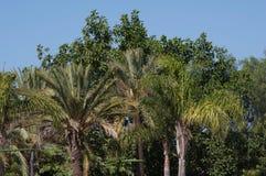 валы тропические Стоковые Изображения