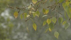 валы лужка листьев берез осени померанцовые первый снежок Листья на ветре акции видеоматериалы