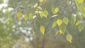 валы лужка листьев берез осени померанцовые первый снежок Листья на ветре видеоматериал