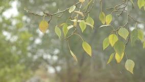 валы лужка листьев берез осени померанцовые первый снежок Листья на ветре сток-видео