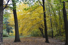 валы лужка листьев берез осени померанцовые Стоковая Фотография RF