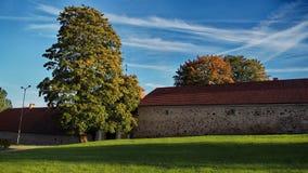 валы лужка листьев берез осени померанцовые Стоковая Фотография