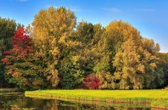 валы лужка листьев берез осени померанцовые Стоковое фото RF