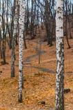 валы лужка листьев берез осени померанцовые стоковые изображения